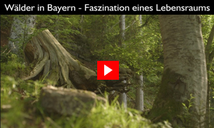 Wälder in Bayern