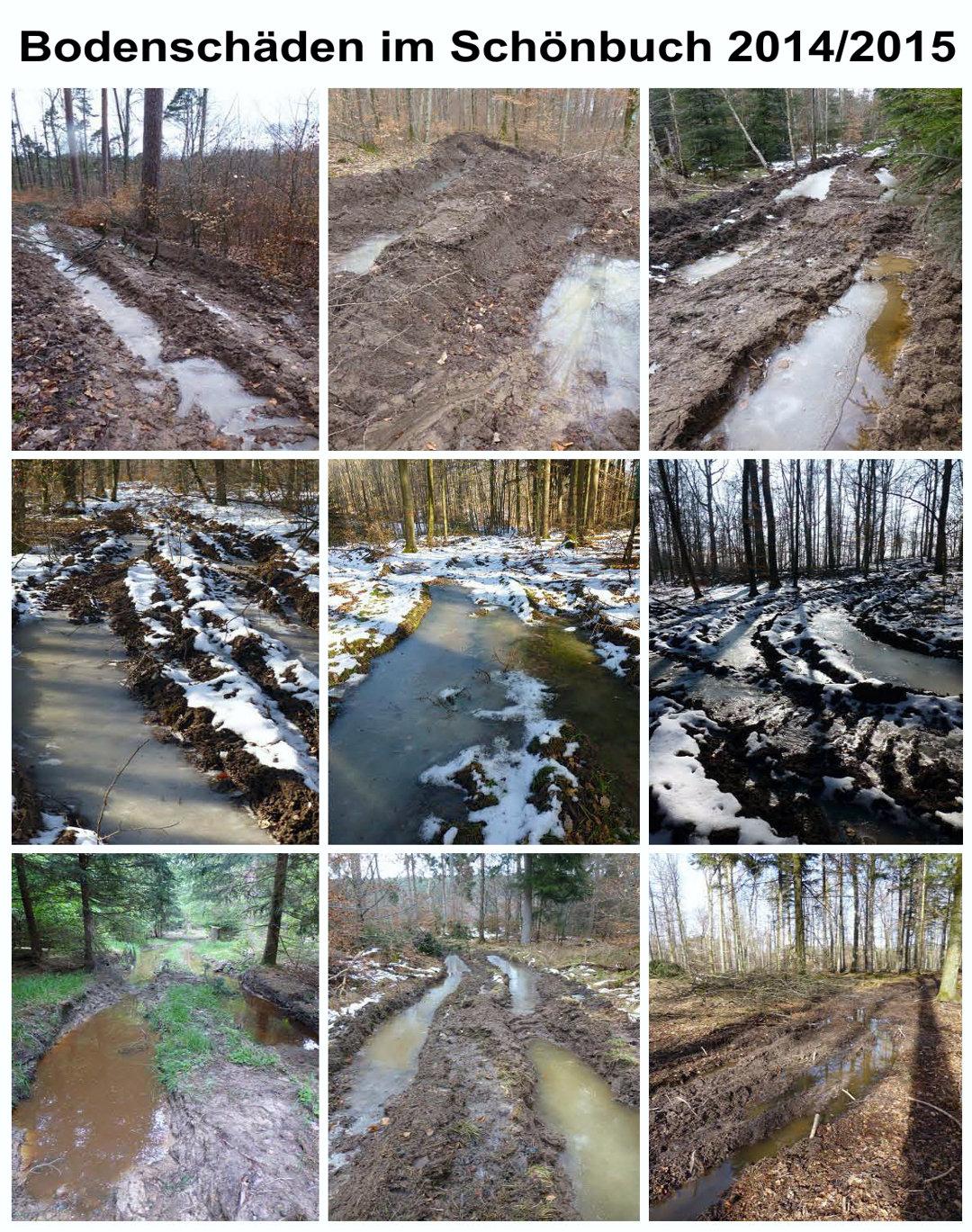 Beispiele für Bodenschäden im Schönbuch 2014-2015-1