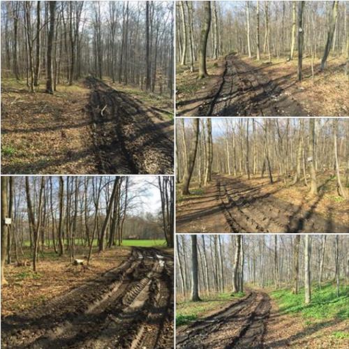 Waldzerstörung